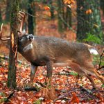 Tips & Tricks to Consider for Whitetail Deer Hunting